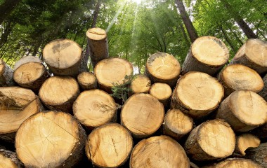 Renewable Enery Directory Biomass